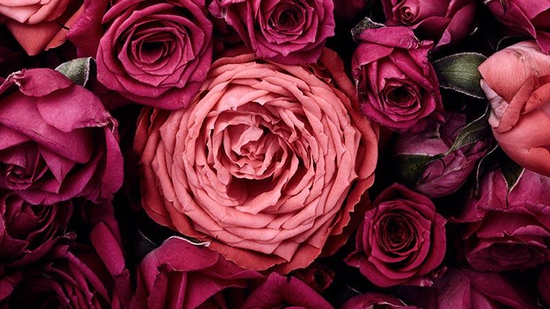 Rose Fleuriste Reunion Livraison Fleurs A La Reunion