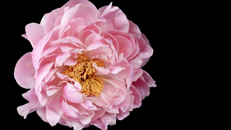 fleurs archives fleuriste r union livraison fleurs la r union. Black Bedroom Furniture Sets. Home Design Ideas