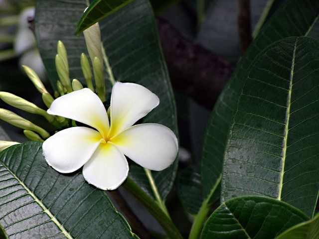 Les Fleurs Exotiques De L Ile De La Reunion Fleuriste Reunion