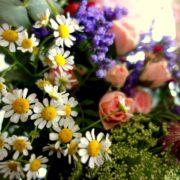 fleurs villandry